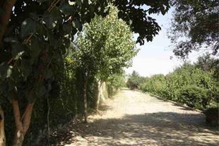 فروش 9000 متر باغ داخل بافت شهریار کد543