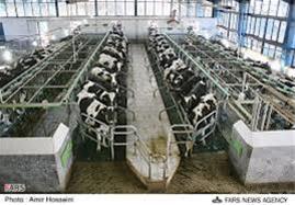 فروش زمین کشاورزی با مجوز گاوداری در آبیک قزوین - 1