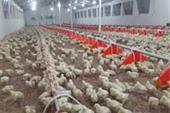فروش مرغداری گوشتی در بویین زهرا قزوین -بویین زهرا