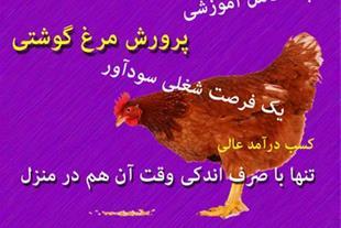 آموزش جامع پرورش مرغ گوشتی