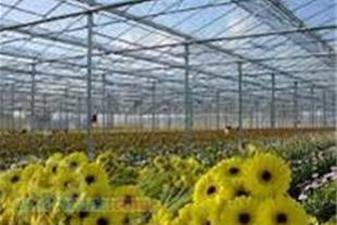 فروش ویژه نایلون گلخانه ای- گروه بازرگانی ایرانیان
