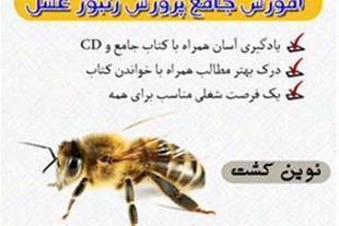 جدیدترین مجموعه پرورش زنبور