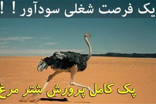 پرورش شتر مرغ شغلی پرسود