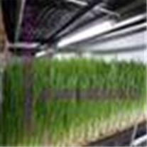 فروش کوکوپیت، انواع بذر، پایه گل و تاسیسات گلخانه