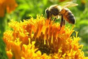 مشاوره اصول زنبور داری در سطح حرفه ای