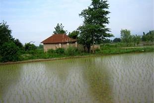 زمین و خانه کلنگی مناسب پرورش ماهی سردابی