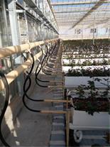 طراحی و اجرای سیستم گرمایشی گلخانه ( آبگرم )