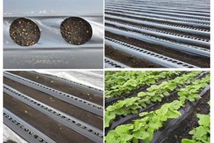 انواع نایلون گلخانه ای و کشاورزی( مالچ مشکی و دو ر