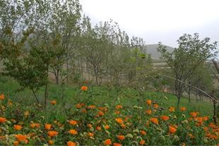فروش ویژه باغ ویلا در منقطه آزاد گردشگری قلعه بابک