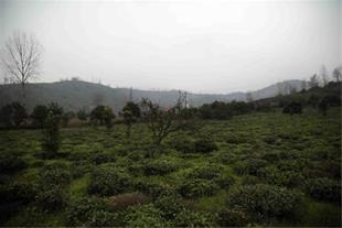 تور پاییزی املش، از باغات چای تا گیله بوم