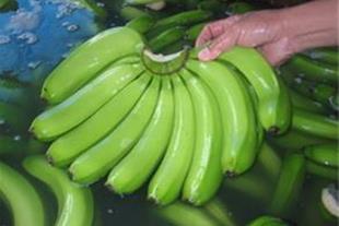 واردات و حمل و ترخیص موز و میوه های گرمسیری