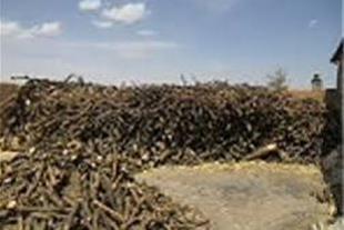 فروش چوب مرکبات رودان بدون واسطه