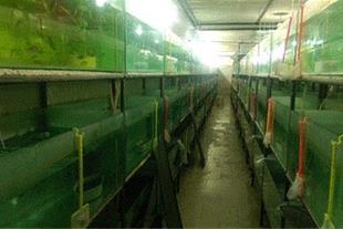 مرکز تکثیر و پرورش ماهیان زینتی محلات