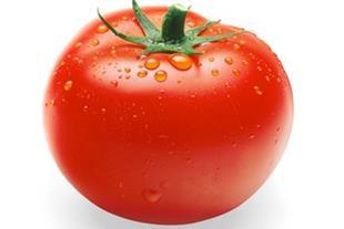 خریدار گوجه فرنگی درجه یک
