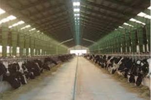 فروش گاوداری شیری 50 راسی در نظرآباد کرج