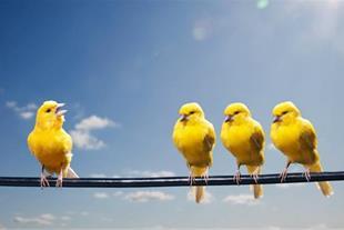 مکمل های تقویتی پرندگان زینتی - تشخیص بیماری