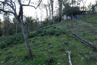 فروش زمین 12000 متری دارای باغ و خانه مسکونی گیلان