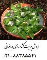 خواص پرلیت کشاورزی و باغبانی زمین کاو