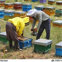 فروش عسل