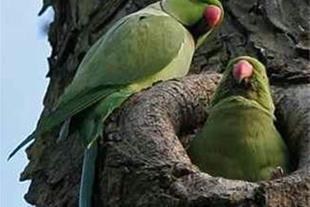 فروش کاسکو.پرندگان وحیوانات خانگی