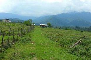 فروش تعدادی زمین سنددار با وام ساخت سیاهکل گیلان