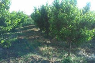 فروش باغ و زمین در تبریز