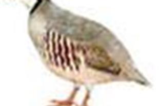 خریدوفروش پرندگان