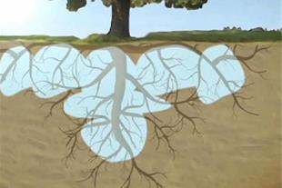 تحولی نو در صنعت آبیاری کشاورزی