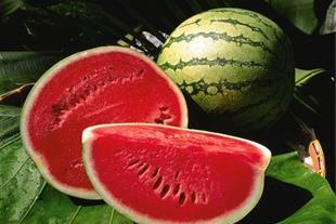 فروش هندوانه برای شب یلدا