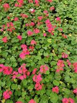 تولید وتهیه گل وگیاهان زینتی گرمسیری وسردسیری مثمر