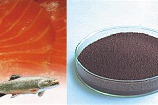 رنگدانه استازانتین خوراکی ماهی  وتخم میگوی ارتمیا