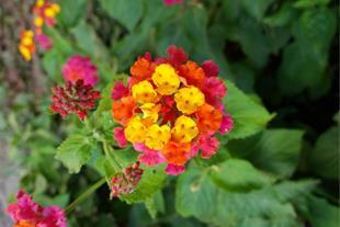 تولید،تهیه و فروش  انواع گل و گیاه فضای باز