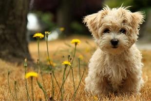 مشاوره، پرورش، فروش و پانسیون انواع سگ