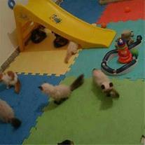 آموزش های اولیه سگهای نگهبان
