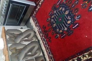 فروش گبه سیرجان پشمی دست ریس