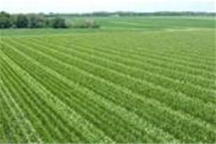 3 هکتار زمین زراعی با پروانه 3 هرازمتر گلخانه