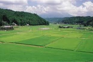 فروش زمین کشاورزی کلاچهاردیواری