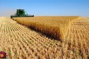 فروش زمین کشاورزی دارای وام مصوب