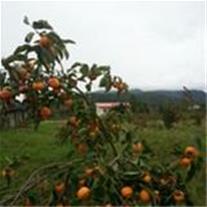 زمینهای کشاورزی وباغی مساخت بالا.09113411245