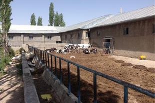 فروش فوری گاوداری شیری فعال با تمام امکانات