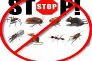 مرکز تخصصی مبارزه باحشرات و جانوران موذی