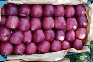صادرات سیب درختی شما به عراق با تضمین مناسب