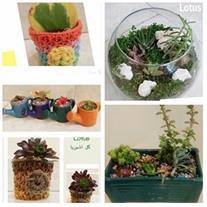 گالری گل و گیاه لوتوس