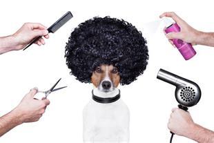 آرایش و اصلاح حیوانات خانگی