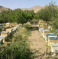 فروش کندو زنبورعسل