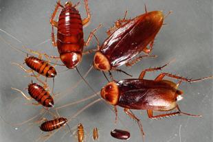 سمپاشی وریشه کنی حشرات با ضمانت نامه کتبی