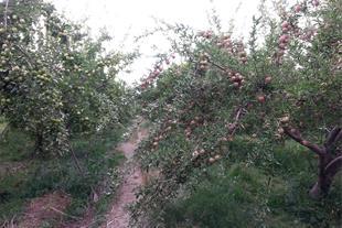 فروش باغ ویلای سیب