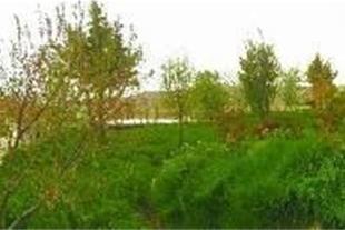 فروش یا معاوضه 7 هکتار مزرعه در استان قزوین - 1