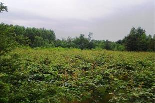 باغ میوه و ویلا در نوخاله