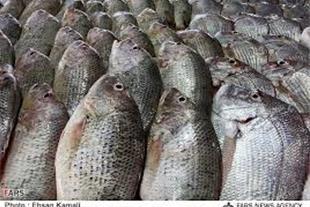 عمده فروشی فروش ماهی،مرغ ،گوشت
